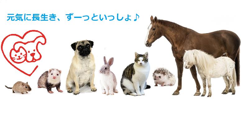 ペットの老化を予防するバイオレゾナンス波動医学療法
