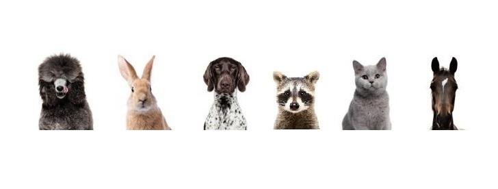 哺乳類全般に使えるバイオレゾナンス波動医学療法
