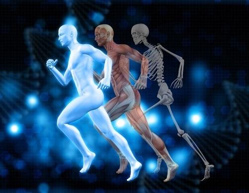 筋肉の老化を予防するバイオレゾナンス波動医学療法
