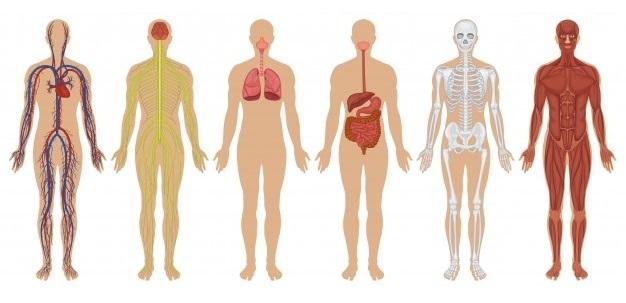 心と体の機能を正常化する、バイオレゾナンス波動療法