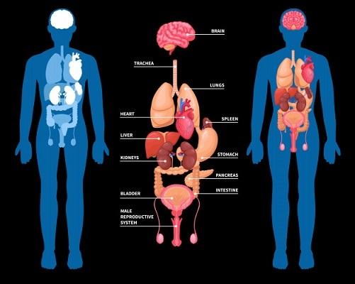 内臓機能を正常化し、未病を予防するバイオレゾナンス波動療法